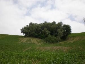 vallesina